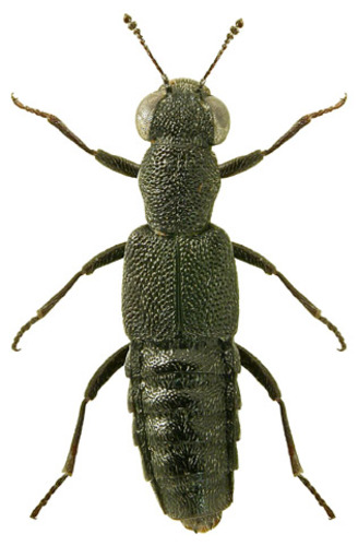 endemische arten mexiko